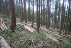 整備後森林